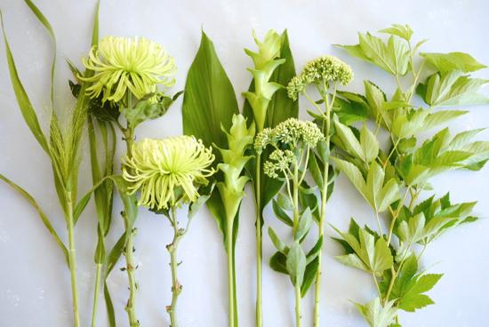 メルマガ8月花材